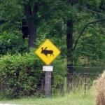 Moose?
