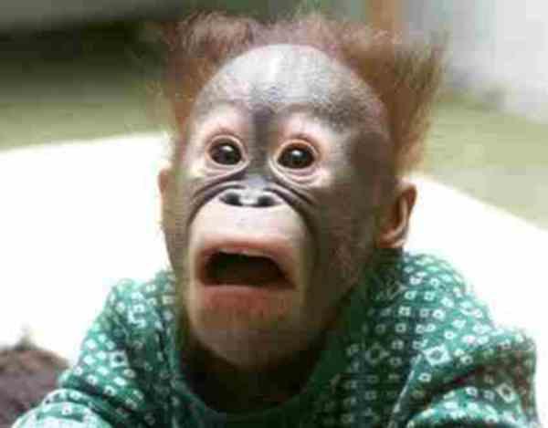 Surprised Monkey