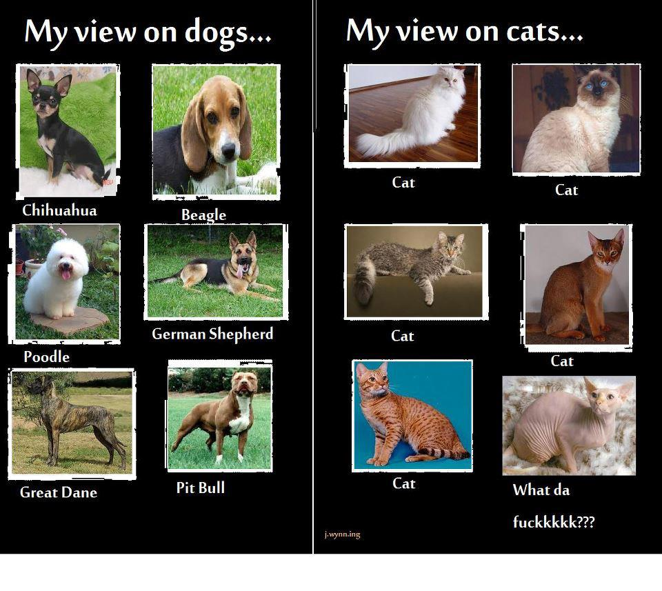 My view on dogs: Chihuahua, Beagle, Poodle, German Shepherd, Great Dane, Pit Bull.  My view on Cats: Cat, Cat, Cat, Cat, Cat, What da fuckkkkk?