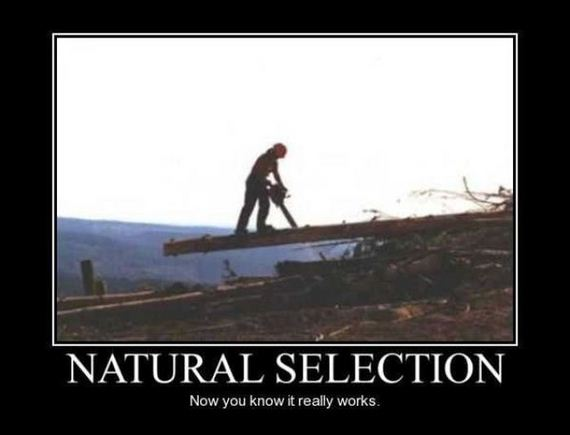 Darwinism Natural Selection