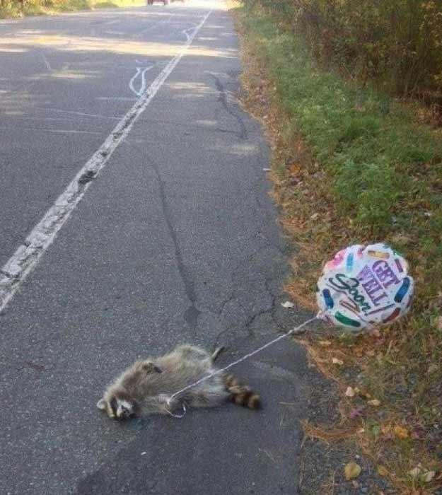 Raccoon: Get Well Soon
