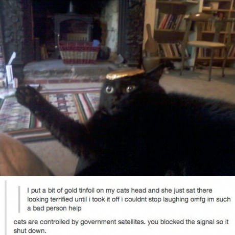 """""""II put a bit of gold tinfoil on my cats head and she just sat there looking terrified until I took it off I couldn't stop laughing omfg i'm such a bad person help"""" """"Cats are controlled by Goverment satellites. You blocked the signal so it shut down."""""""