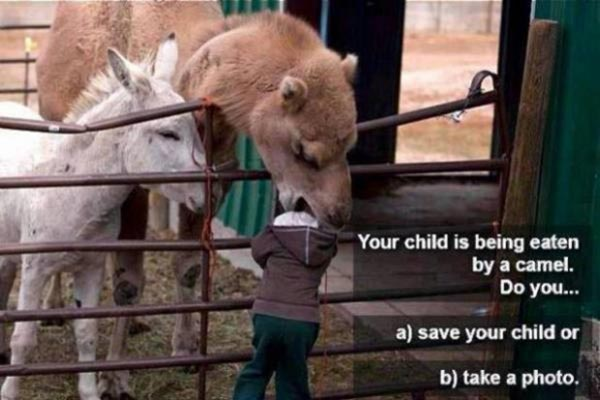 Your child is being eaten by a camel.  Do you... A) save your child? or B) take a photo?
