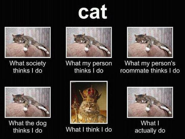 """Cat: """"What society thinks I do."""" """"What my person thinks I do."""" """"What my person's roommate thinks I do.""""  """"What the dog thinks I do."""" """"What I think I do."""" """"What I actually do."""""""