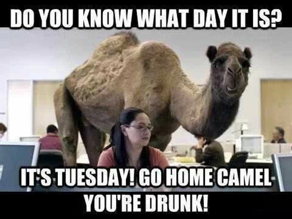 Do You Know What Day It Is?  It's Tuesday! Go Home Camel. You're Drunk.