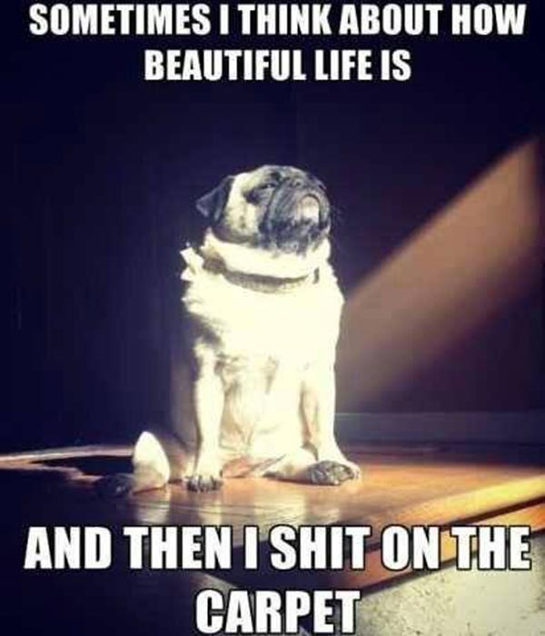 Sometimes I think about how beautiful life is.  And then I shit on the carpet.
