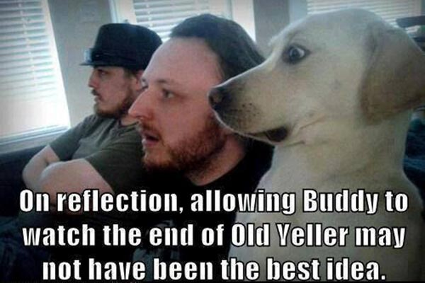 On reflection, allowing Buddy to watch the end of Old Yeller might not have been the best idea...