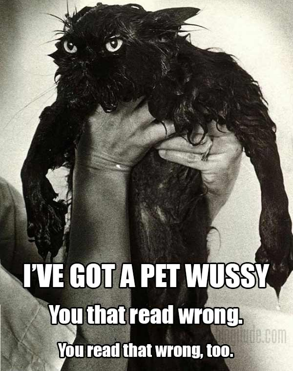 I've got a pet wussy. You that read wrong. You read that wrong, too.