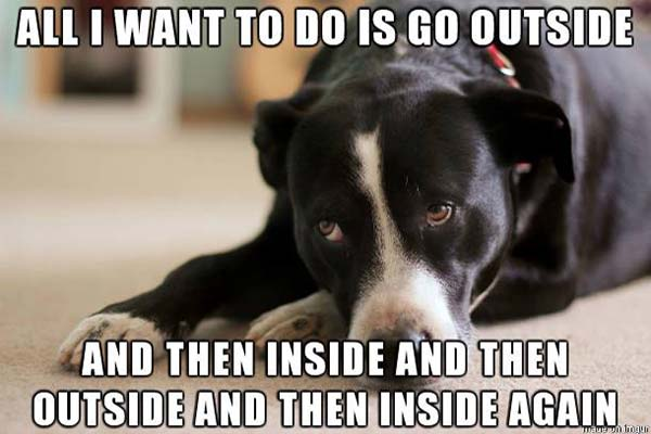 """Dog: """"All I want to do is go outside. And then inside. And then outside. And then inside again."""""""